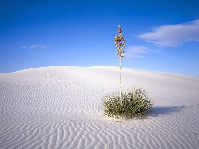 7002384-desert-background