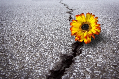 flowerincrack.jpg